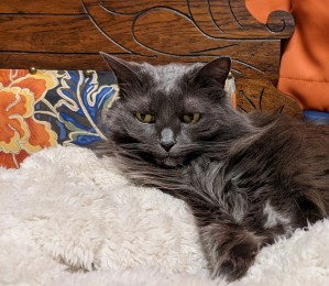 cat on chaise lounge chair - the chair that stole my heart - stories of petey